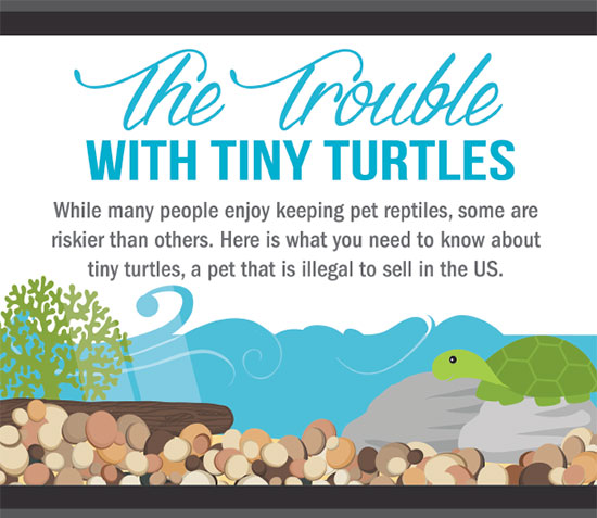 trouble with turtles