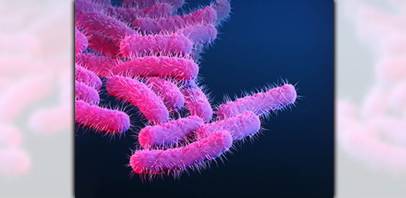 Rod-shaped, drug-resistant Shigella bacteria