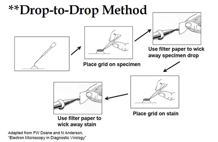 Figure 1: Drop-to-Drop Method illustration outlined in section 2.B, for previously fixed specimens.