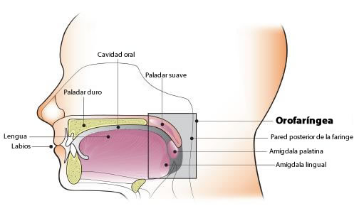 tratamiento de condilomas linear unit solfa syllable boca