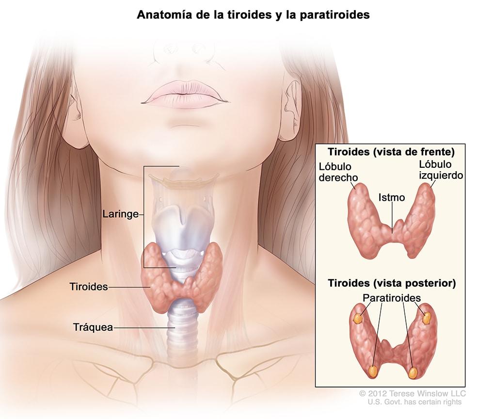 CDC - Cáncer de tiroides