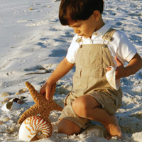 Niño jugando con conchas marinas
