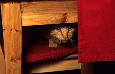 Preparación de mascotas para casos de desastre