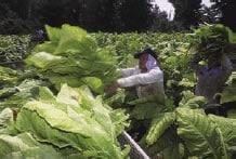 Fotografía de un trabajador en el campo