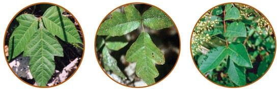 Cdc publicaciones de niosh datos breves de niosh - Plantas venenosas de interior ...