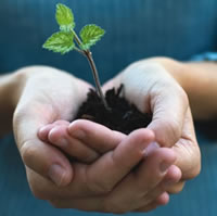 Hands holding a seedling