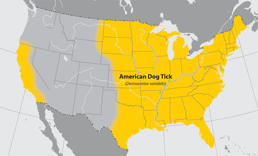 approximate distribution of the american dog tick in the united states of america