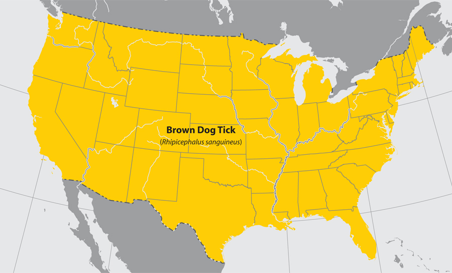 Approximate distribution of the Brown dog tick