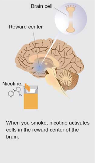 Slide 1 - When you smoke, nicotine activates cells in the reward center of the brain (Brain cell illustration, illustration of brain with Reward center, illustration of cigarettes with nicotine pointing to it)