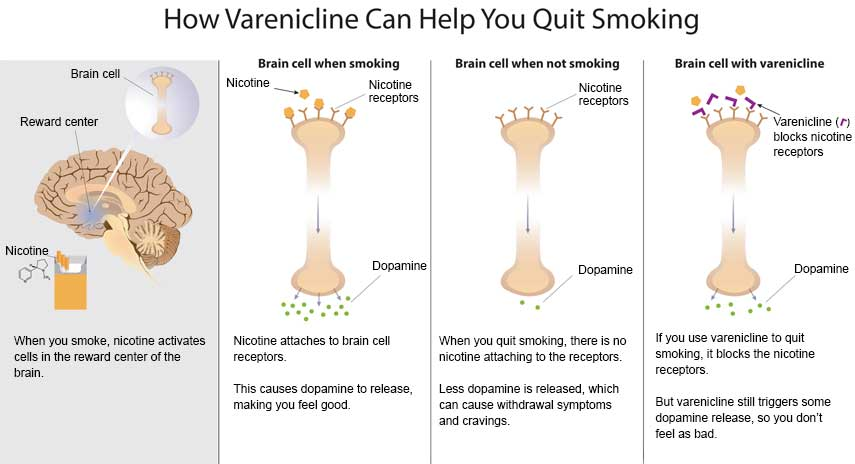 How varenicline can help you quit smoking - Slide 1 - When you smoke, nicotine activates cells in the reward center of the brain (Brain cell illustration, illustration of brain with Reward center, illustration of cigarettes with nicotine pointing to it) Slide 2 - Illustration of a brain cell when smoking showing nicotine, nicotine receptors and dopamine.  Nicotine attaches to brain cell receptors.  This causes dopamine to release, making you feel good. Slide 3 - Illustration of brian cell when not smoking. Showing nicotine receptors and dopamine response Slide 4 - Illustration of Brian cell showing how varenicline blocks nicotine receptors and how dopamine responds.  If you use varenicline to quit smoking, it blocks the nicotine receptors.  But varenicline still triggers some dopamine release, so you don't feel as bad.