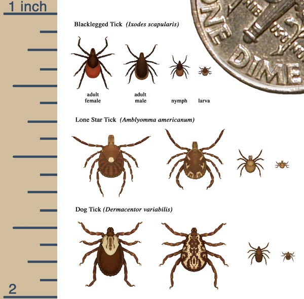 Image: Various Tick Sizes