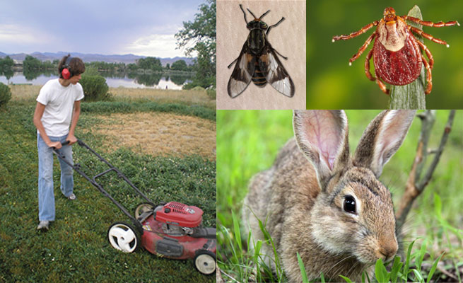 Photo montague of person mowing grass with a push mower, a horse fly, a rabbit and a tick.