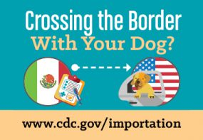 Crossing the Border with your dog? www.cdc.gov/importation