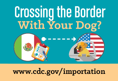 Bringing a Dog into the United States | Bringing an Animal