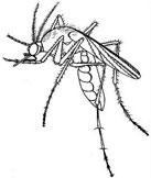 clipart of mosquito