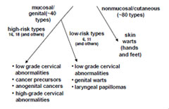 Human Papillomavirus Types and Disease Association chart as described in the Human Papillomavirus section