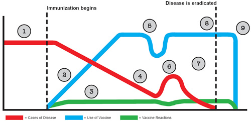 Graph showing the life-cycle of an immunization program