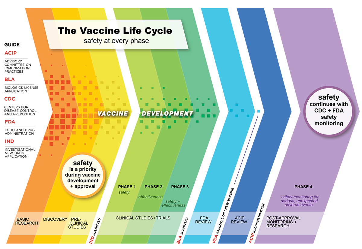 Vaccine safety in the United States includes safety measures at every phase of vaccine development and approval, and ongoing safety monitoring once vaccines are in use.