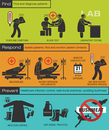 Stopping the Ebola Outbreak infographic