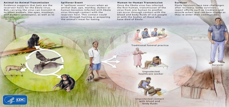 Ecología del Ebolavirus