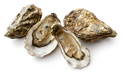 4 oysters on white background