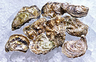 Image of Oysters on ice