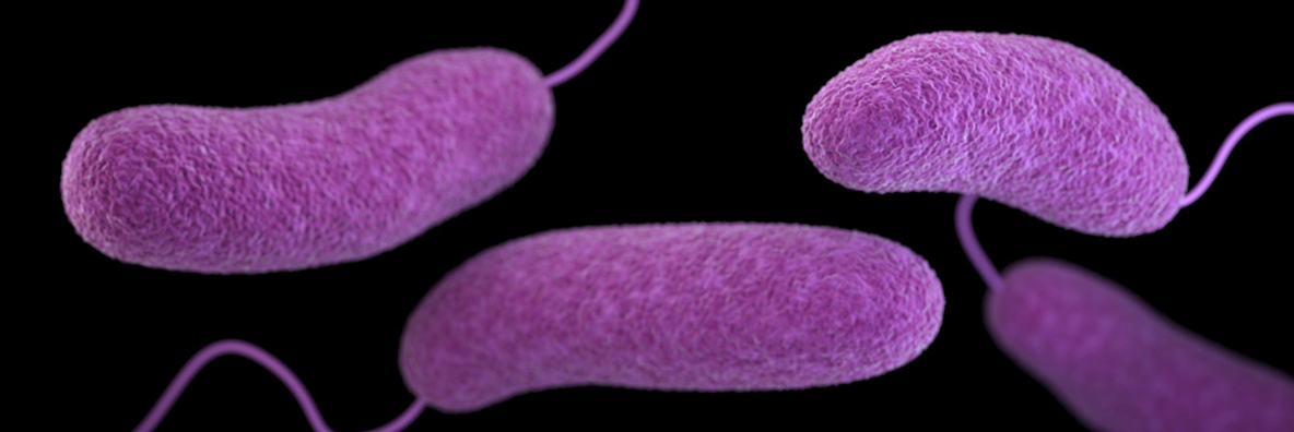 About a dozen Vibrio species can cause human illness, known as vibriosis.