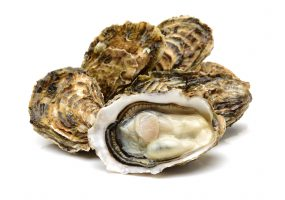 Photo of oysters.