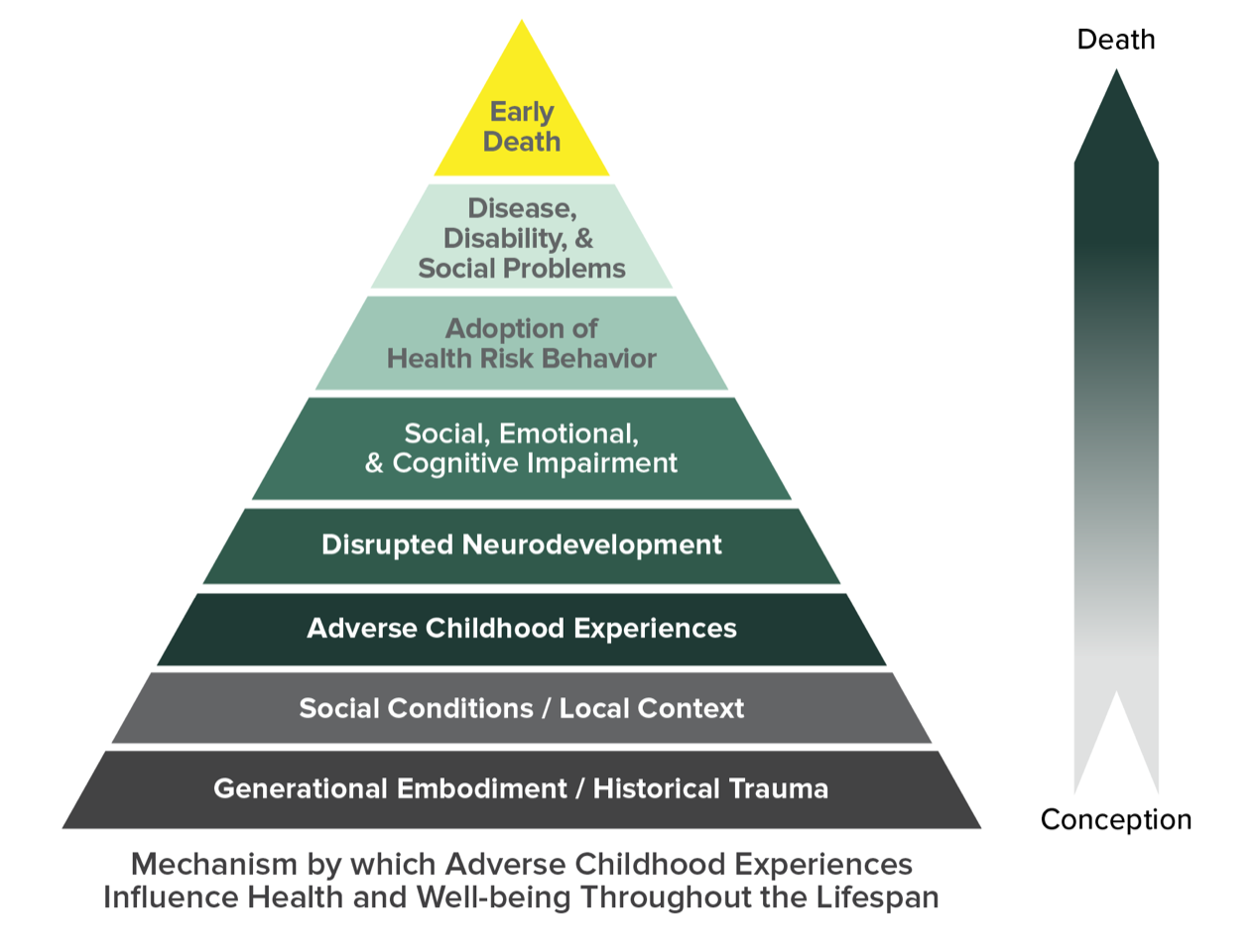 ACE Pyramid represents the conceptual framework for the ACE Study