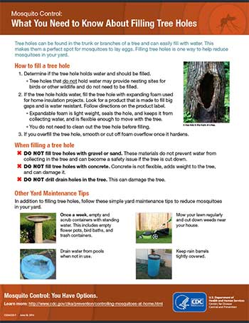 What you need to know about filling tree holes fact sheet thumbnail