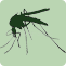 image of mosquito