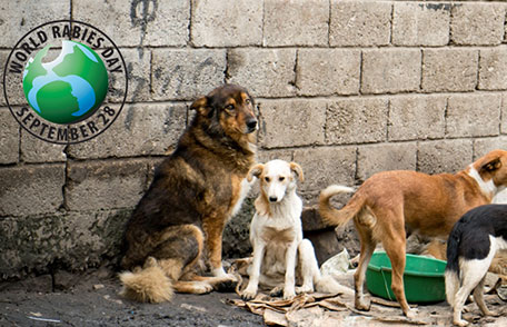 Free-roaming dogs in Ethiopia with World Rabies Day logo