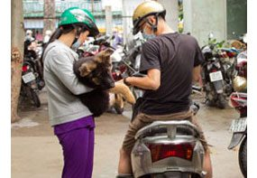 Public health workers in Vietnam use motorcycles to travel around the city and vaccinate dogs.