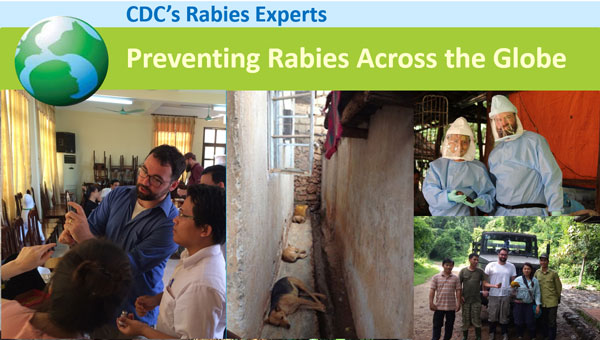 Image of world rabies day, preventing rabis across the globe.