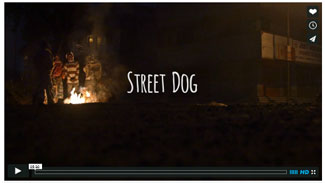 Image of videw, Street Dog. Dogs in Jamshedpur, India.