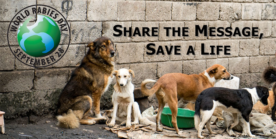 World Rabies Day September 28, 2018. Share the Message Save a Life. Many dogs