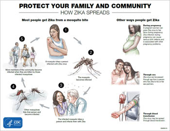 Protect your family and community: How Zika spreads infographic thumbnail