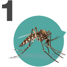 mosquitoes primarily spread