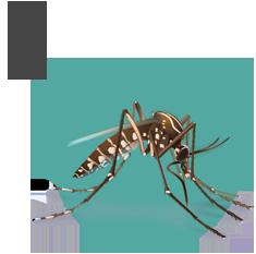 os mosquitos se propagam principalmente