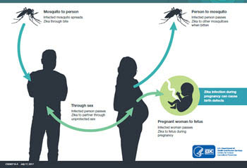 How Zika Spreads thumbnail