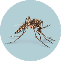 Graphic of a mosquito