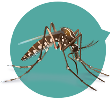 Conduct mosquito surveillance