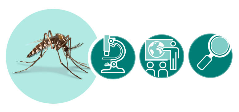 Clipart montague of a mosquito, a microscope, a stick figure at a chalkboard and a magnifying glass.