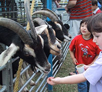 Image of children at fair feeding goats.